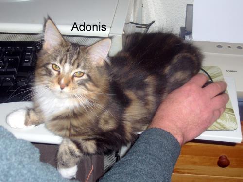 adonis auf dem mauspad