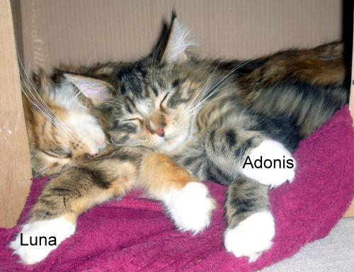 adonis und luna