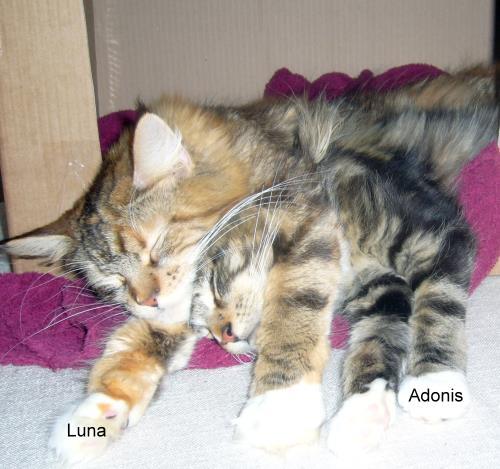 luna und adonis