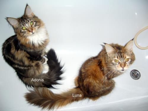 badewannenkatzen