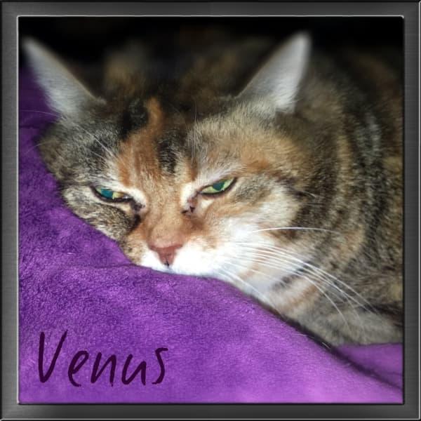 Venus , geboren ca. 2002