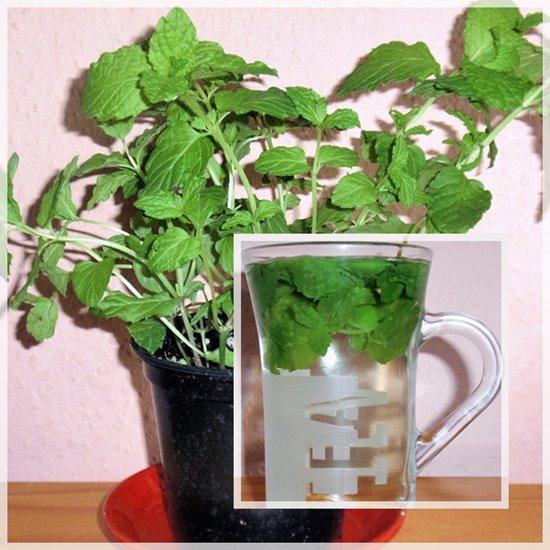 Tee mit frischer Minze
