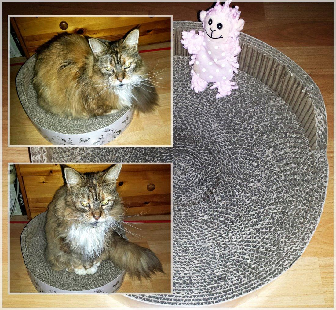Katze Luna und ihre neue Kratzpappe
