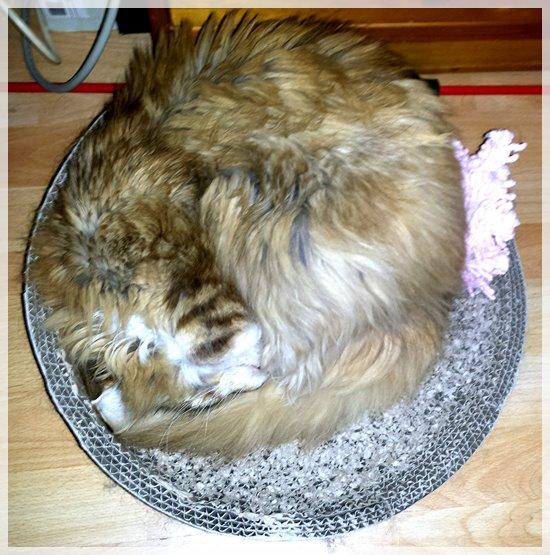Luna schlaeft auf ihrer Kratzpappe
