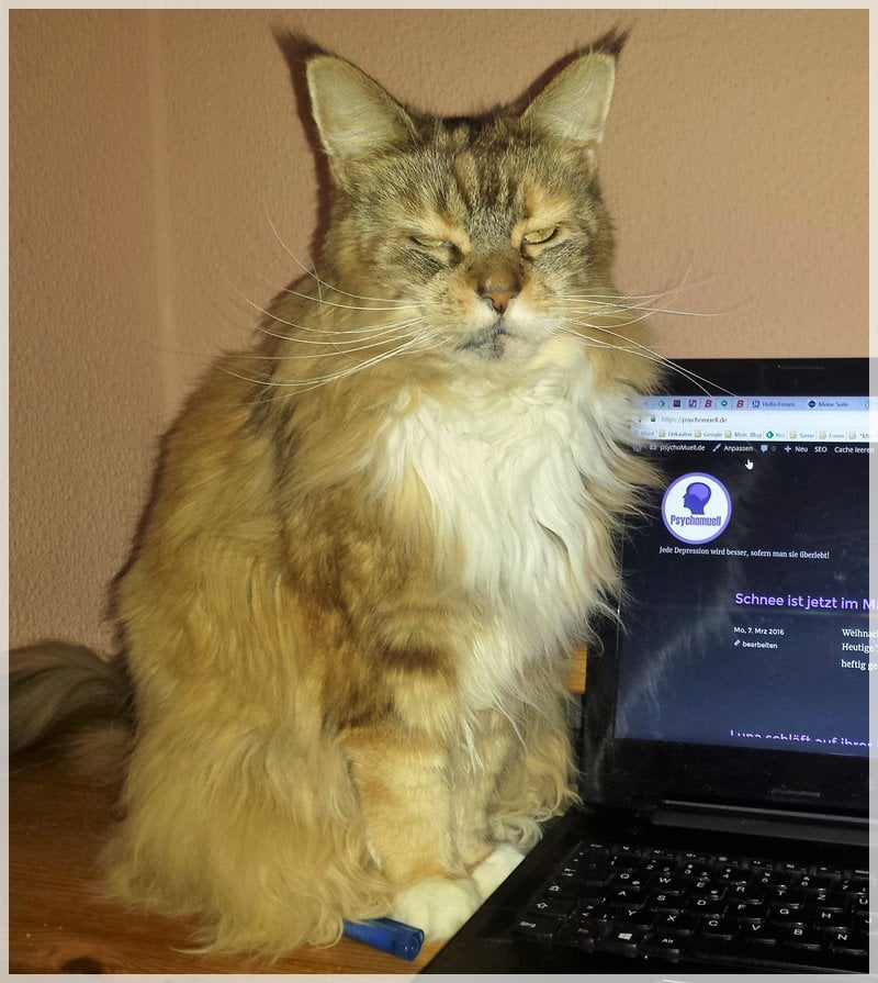 Luna sitzt neben dem Laptop
