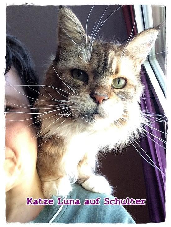 Katze Luna auf meiner Schulter