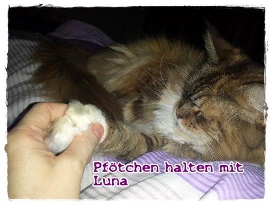 Pfoetchen halten mit Luna