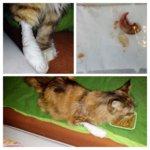 Katze Lunas verletzte Pfote