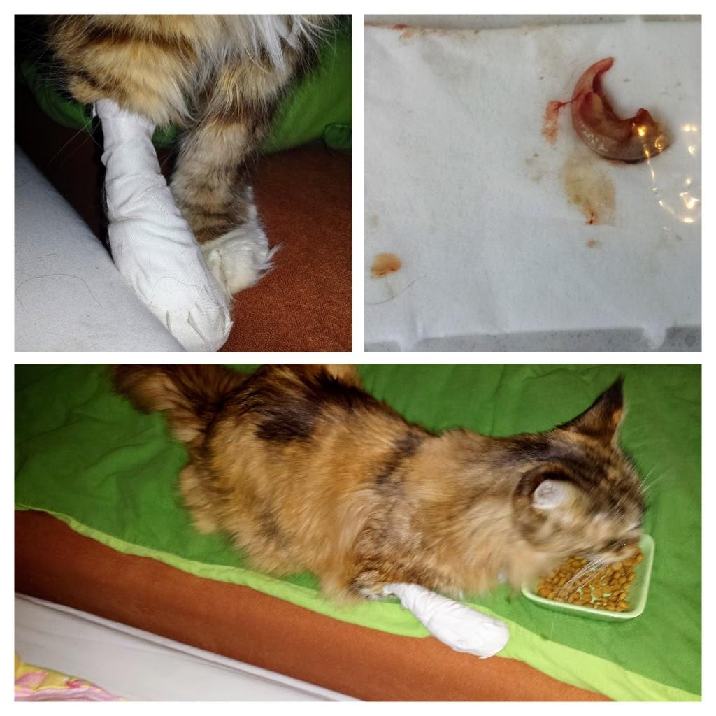 Katze Luna muss einige Male zum Tierarzt